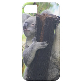 Koala Case iPhone 5 Cases