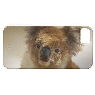 Koala Coque iPhone 5