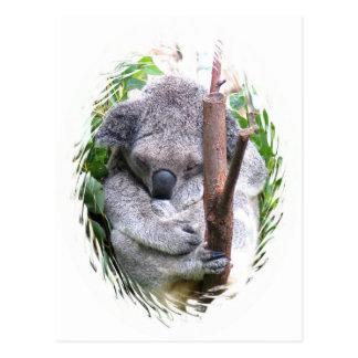 Koala Cuddle Postcard