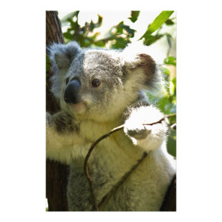 koala custom stationery
