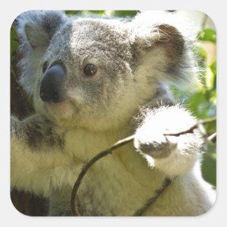 Koala cutie square stickers