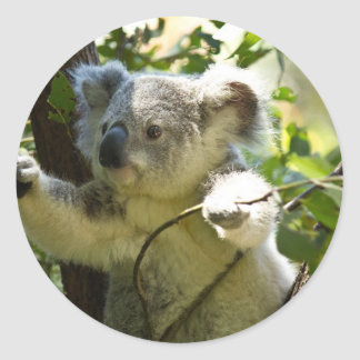 Koala cutie round sticker