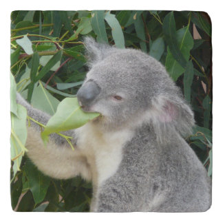 Koala Eating Gum Leaf Trivet