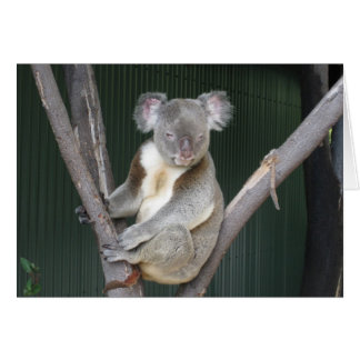 Koala Encouragement Notecard