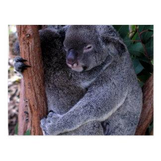 Koala Family Postcard