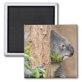 Koala Headshot Magnet