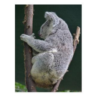 koala hug postcard