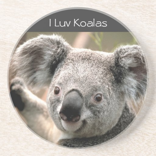 Koala, I Luv Koalas Drink Coaster