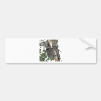 Koala in a Tree Bumper Sticker