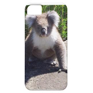 Koala in the wild iPhone 5 cover