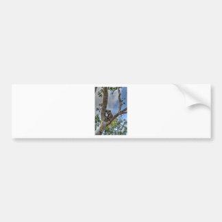 KOALA IN TREE AUSTRALIA ART EFFECTS BUMPER STICKER