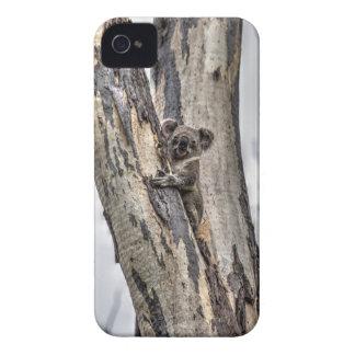 KOALA IN TREE AUSTRALIA ART EFFECTS Case-Mate iPhone 4 CASES