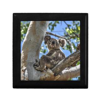 KOALA IN TREE AUSTRALIA ART EFFECTS GIFT BOX