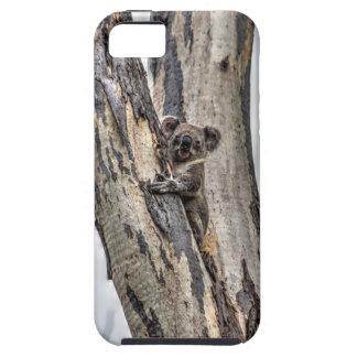 KOALA IN TREE AUSTRALIA ART EFFECTS iPhone 5 COVER