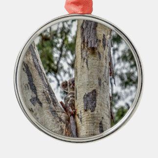 KOALA IN TREE AUSTRALIA ART EFFECTS METAL ORNAMENT