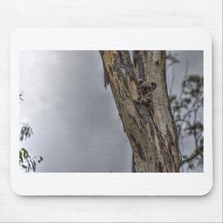 KOALA IN TREE AUSTRALIA ART EFFECTS MOUSE PAD