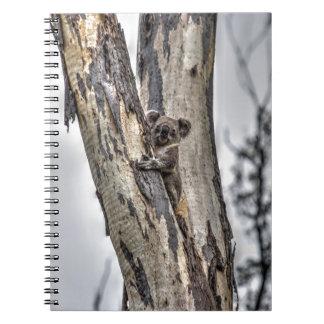 KOALA IN TREE AUSTRALIA ART EFFECTS NOTEBOOK