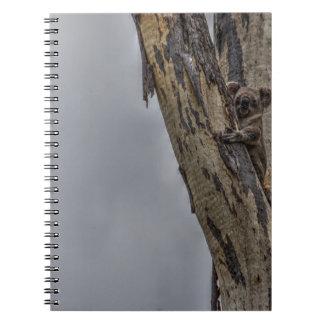 KOALA IN TREE AUSTRALIA ART EFFECTS NOTEBOOKS