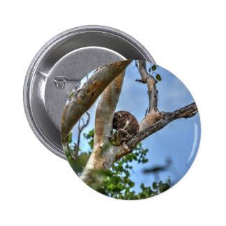 KOALA IN TREE AUSTRALIA WITH ART EFFECTS 6 CM ROUND BADGE