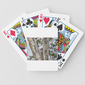 KOALA IN TREE AUSTRALIA WITH ART EFFECTS BICYCLE PLAYING CARDS