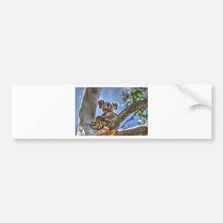 KOALA IN TREE AUSTRALIA WITH ART EFFECTS BUMPER STICKER