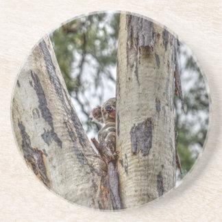KOALA IN TREE AUSTRALIA WITH ART EFFECTS COASTER