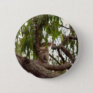 KOALA IN TREE QUEENSLAND AUSTRALIA 6 CM ROUND BADGE