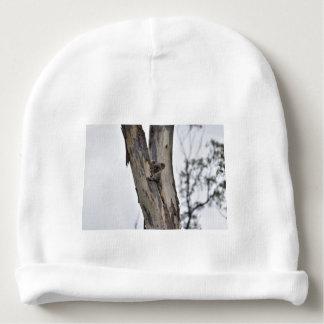KOALA IN TREE QUEENSLAND AUSTRALIA BABY BEANIE