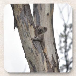 KOALA IN TREE QUEENSLAND AUSTRALIA BEVERAGE COASTERS