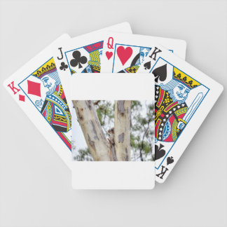 KOALA IN TREE QUEENSLAND AUSTRALIA BICYCLE PLAYING CARDS