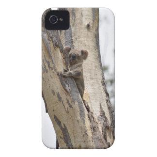 KOALA IN TREE QUEENSLAND AUSTRALIA Case-Mate iPhone 4 CASES