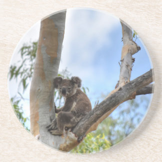 KOALA IN TREE QUEENSLAND AUSTRALIA COASTER