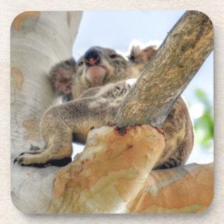 KOALA IN TREE QUEENSLAND AUSTRALIA COASTERS