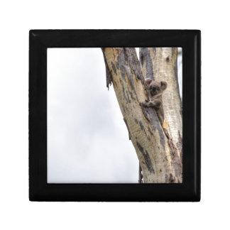 KOALA IN TREE QUEENSLAND AUSTRALIA GIFT BOX