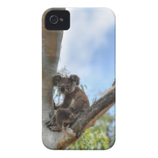KOALA IN TREE QUEENSLAND AUSTRALIA iPhone 4 COVERS