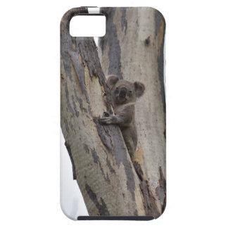 KOALA IN TREE QUEENSLAND AUSTRALIA iPhone 5 CASE