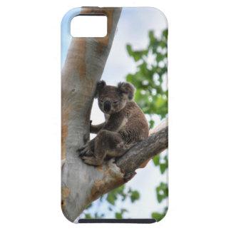 KOALA IN TREE QUEENSLAND AUSTRALIA iPhone 5 COVERS