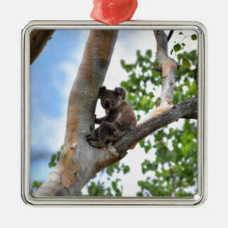 KOALA IN TREE QUEENSLAND AUSTRALIA METAL ORNAMENT