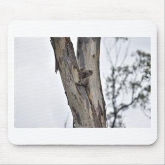 KOALA IN TREE QUEENSLAND AUSTRALIA MOUSE PAD