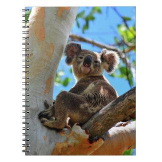 KOALA IN TREE QUEENSLAND AUSTRALIA NOTEBOOK