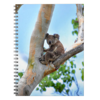 KOALA IN TREE QUEENSLAND AUSTRALIA NOTEBOOK