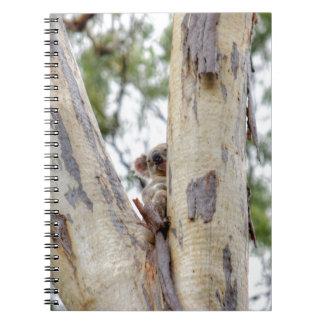KOALA IN TREE QUEENSLAND AUSTRALIA NOTEBOOKS