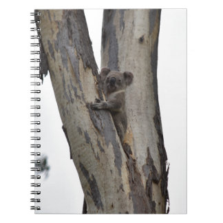 KOALA IN TREE QUEENSLAND AUSTRALIA NOTEBOOKS