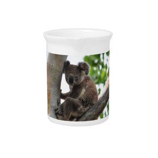 KOALA IN TREE QUEENSLAND AUSTRALIA PITCHER