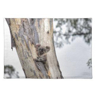 KOALA IN TREE QUEENSLAND AUSTRALIA PLACEMAT