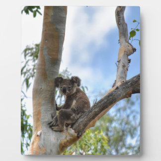 KOALA IN TREE QUEENSLAND AUSTRALIA PLAQUE