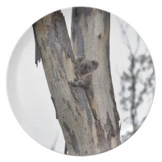 KOALA IN TREE QUEENSLAND AUSTRALIA PLATE