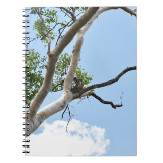 KOALA IN TREE QUEENSLAND AUSTRALIA SPIRAL NOTEBOOK
