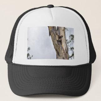 KOALA IN TREE QUEENSLAND AUSTRALIA TRUCKER HAT