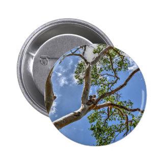 KOALA IN TREE RURAL QUEENSLAND AUSTRALIA 6 CM ROUND BADGE